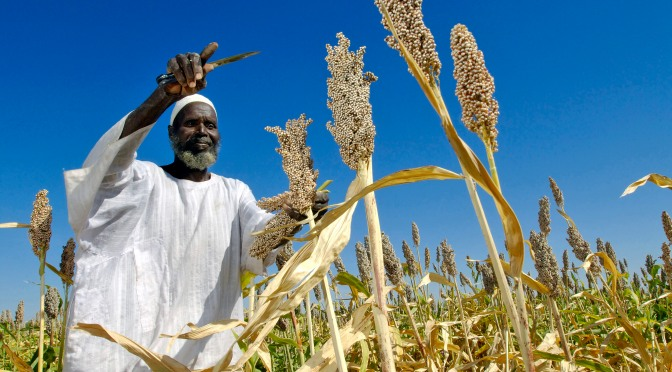 Covering Agriculture, Poverty, and Hunger in Tanzania