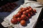 Tomatoes in Zambia - N'gombe Compound