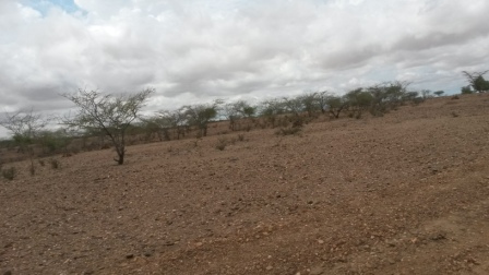 Turkana's terrain is rough and dry. There are no existent roads in the area.