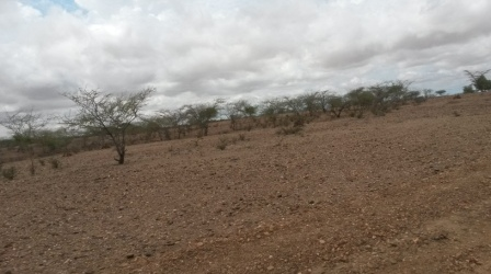 Turkana Children in Kenya Continue to Suffer Malnutrition Amid Poor HealthServices