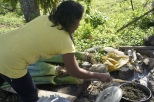 Elsa Morales stews coconut husks and swamp cabbage to feed her pigs.