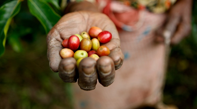 Three Avocados Creates Clean Water and Education Projects Through Coffee Sales